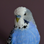 The Chancellor's Budgie (correction)